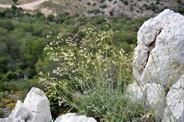 Χαϊδάρι Σήμερα Απόφαση του Δασαρχείου Αιγάλω για προστασία σπάνιων-πολύτιμων φυτών του Ποικίλου 1