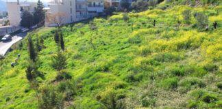 """Χαϊδάρι Σήμερα Εθελοντική δενδροφύτευση στο """"κίτρινο"""", με φυτάρια του Διομήδειου Κήπου 1"""