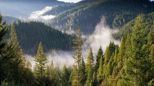 Χαϊδάρι Σήμερα Καταπράσινο δάσος σε Αιγάλεω – Ποικίλο; Κι όμως ΝΑΙ, μπορεί να γίνει! 1