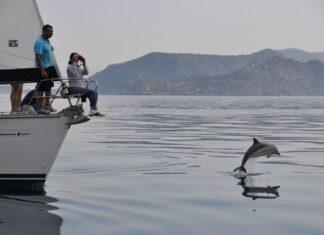 Χαϊδάρι Σήμερα Δελφίνια Κορινθιακού: 3 παγκόσμιες μοναδικότητες και μια απίθανη διασταύρωση 2