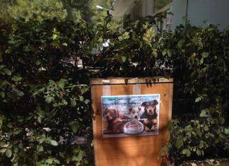 Χαϊδάρι Σήμερα Οι πρώτες ταΐστρες ζώων στο Χαϊδάρι