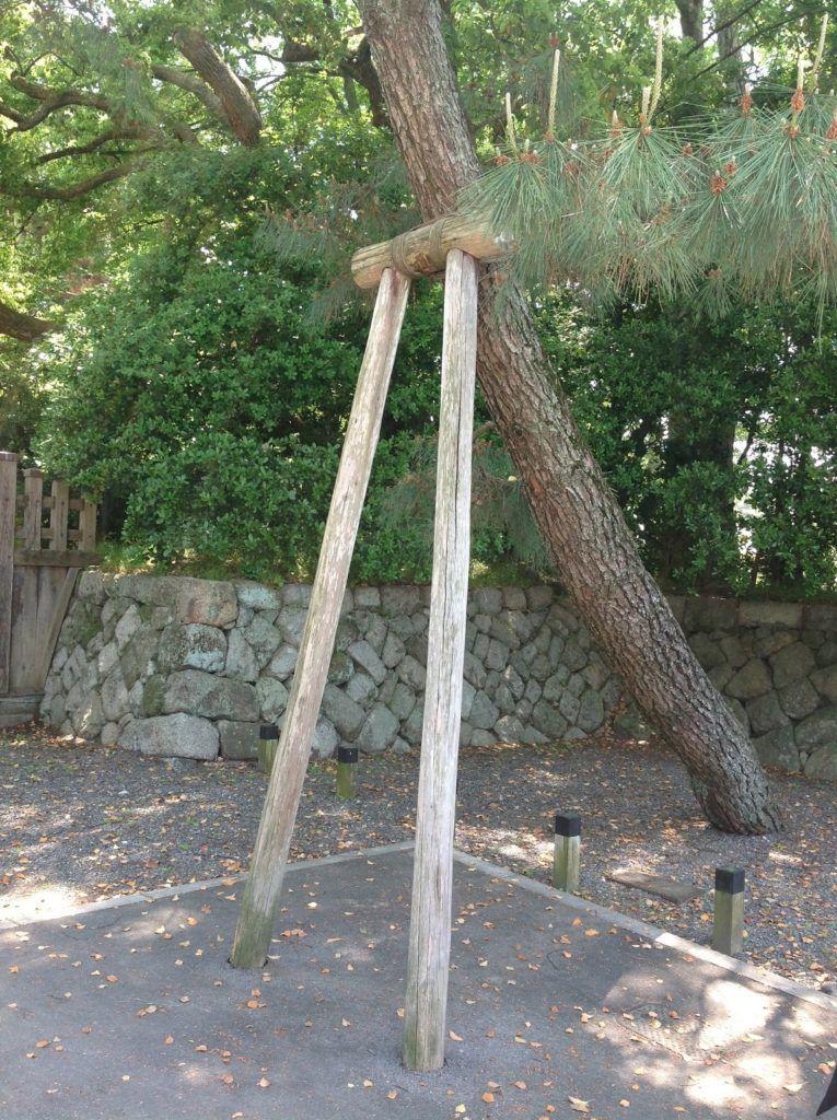 Χαϊδάρι Σήμερα Φροντίδα για τα δέντρα στον ιστορικό πευκότοπο του Χαϊδαρίου 4