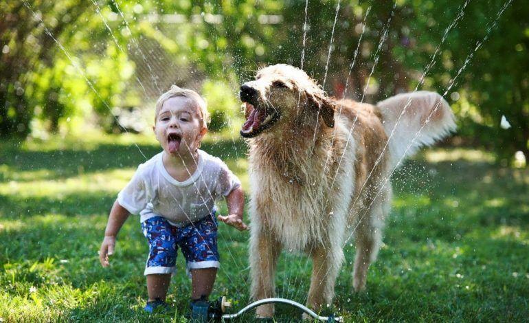 Χαϊδάρι Σήμερα Όταν το παιδάκι σας σάς ζητάει ένα ζωάκι… 3