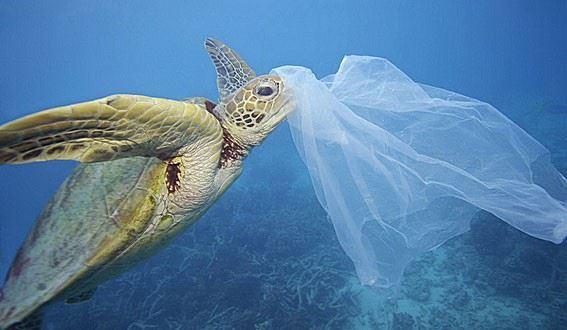 Χαϊδάρι Σήμερα Επειδή πολλές βλακείες ακούστηκαν για τις πλαστικές σακούλες... 1